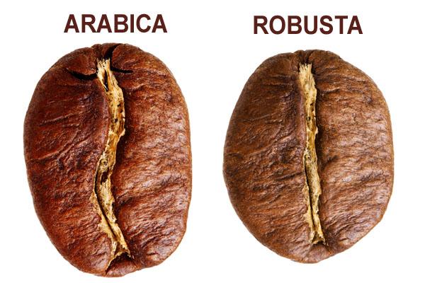 Сорта кофе и их особенности